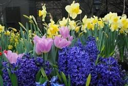 Blog 18oktober Blomsterløg
