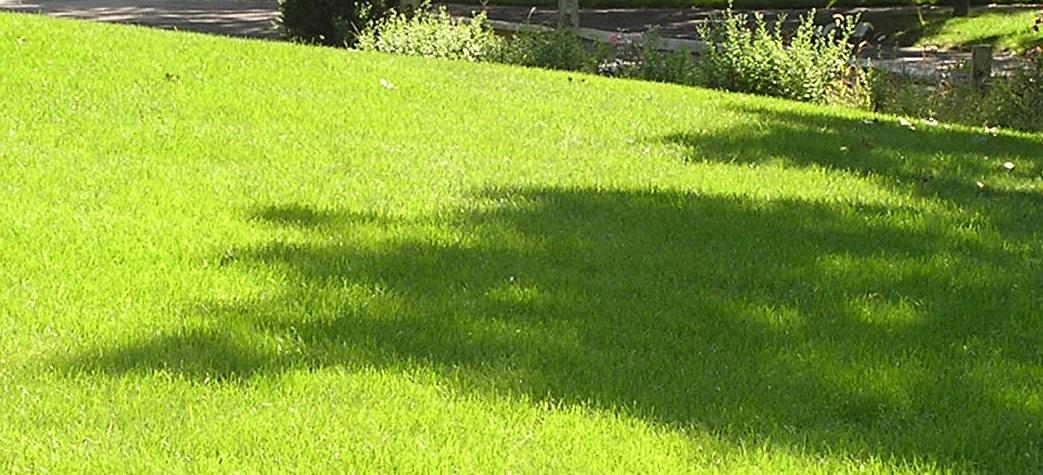 Græsplæne Skal Have Gødning 1043