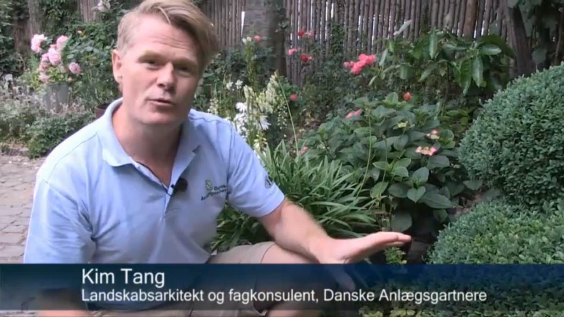 Danske Anlægsgartnere Beskær Selv Dine Buske