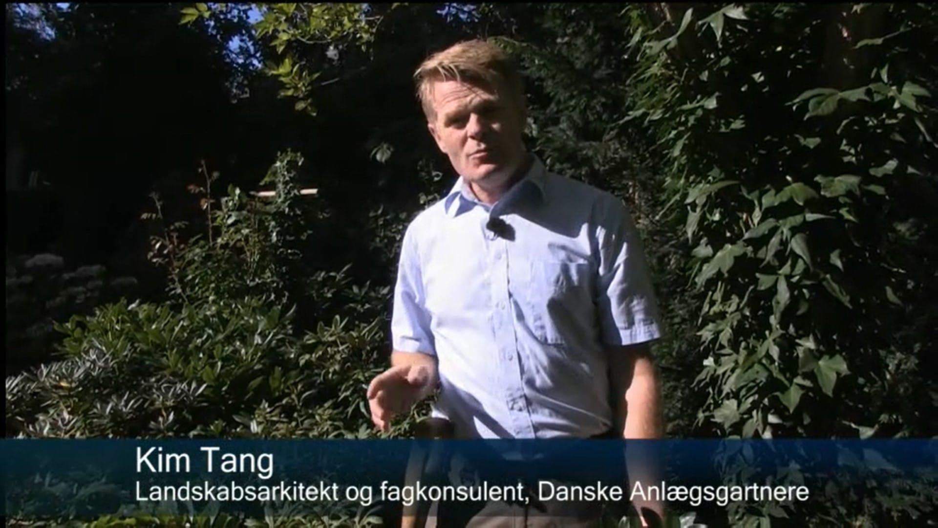 Screenshot Stedsegrønne